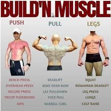 push pull legs split 3 6 day weight