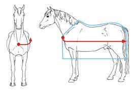 Shetland Pony Rug Size Chart What Size Rug Love My Horse