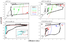 generic cell cycle model one dimensional bifurcation diagrams of budding yeast cells mutations interfering cyclin degradation