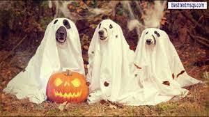 Halloween Wallpaper, Halloween desktop ...