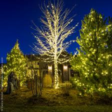 lighting outdoor trees. Light Wrapped Outdoor Christmas Trees Lighting