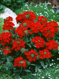 Diy Garden Projects 17 Low Maintenance Plants And Dwarf Shrubs Low Maintenance