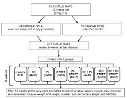 2 02 Skeletal Muscle Chart Effects Of Resistive Exercise And Stretching On The Soleus