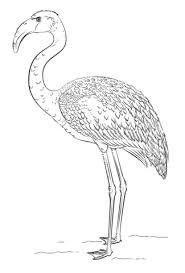 Kleine Flamingo Kleurplaat Gratis Kleurplaten Printen