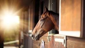 how to identify and treat lice on horses