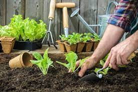 how to start your own vegetable garden