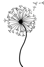 How To Draw A Dandelion Easy Dandelion Drawing Step By Step