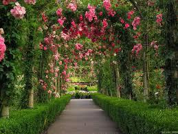 free flower garden wallpapers. Beautiful Garden Rose Flower Garden Wallpaper To Free Wallpapers F