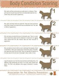 Cat Bmi Chart Pin On Fur Pet Edition