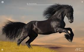 Black Horses HD Wallpapers New Tab ...