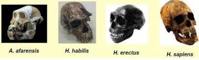 ¿De donde salieron los humanos?: Evolucionismo o creacionismo. - Página 6 Images?q=tbn:ANd9GcSISAAJ7J0AdbyuQX--8LdAPsE7ye7udLHYfyTNJIytRz0bbQ1cow