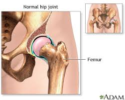 ball and socket joint. normal anatomy ball and socket joint