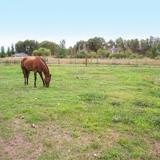 Horse Joint Supplements Guide Expert Advice On Horse Care