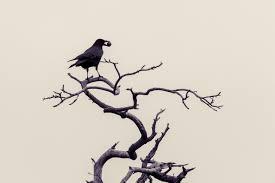картинки филиал холодно зима черное и белое черный ветка