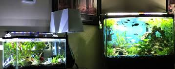 Finnex Stingray Aquarium Led Light Comparison Of Color Temperature Finnex Stingray Vs Planted