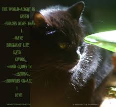the creative cat art~photography~writing~poetry poem for spring mewsette ponders green middot black cats cat
