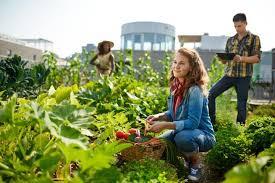 community gardening. Plain Gardening 10 Benefits And Steps To Starting A Community Garden To Gardening C