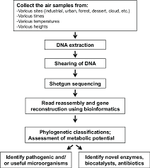 Flow Chart Of The Process Involved In Shotgun Metagenomic