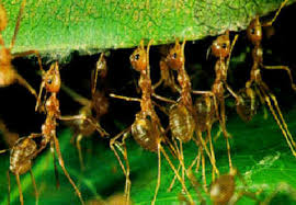 Image result for ant swarms