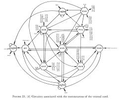 Earthworm diagram worksheet nervous system
