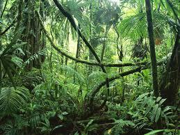 amazon rainforest tree leaves. Amazon Rainforest With Tree Leaves