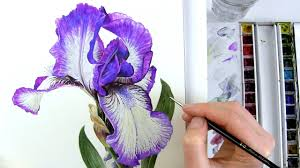 how to paint realistic botanical bearded iris in watercolour with anna mason you