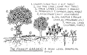 how to plant a food forest this winter modern farmer how to plant a food forest this winter