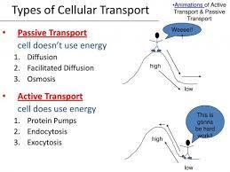Venn Diagram Of Diffusion Osmosis And Active Transport Venn Diagram Of Diffusion And Osmosis