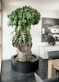 great office plants. Office Plants Green Offices Plant Container Combinations Shop Include Delivery Europe-wide Great