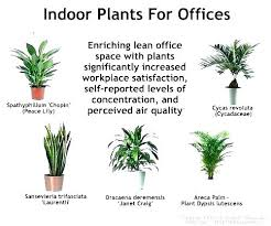 Image Indoor Flowering Best Indoor Office Plants Good Office Plant Small Office Plants Best Plants For Office Indoor Plants Best Indoor Office Plants Newspodco Best Indoor Office Plants No Sunlight Plants Office Plants No