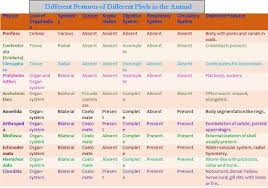 Animal Phyla Comparison Chart 72 Specific Phylum Comparison Chart