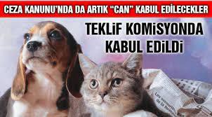 Hayvanları Koruma Kanunu, TBMM Komisyonu'nda Kabul Edildi - KENT34 -  İstanbul Gazetesi