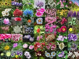 Flowers name list, Flower names ...