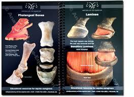 Hoof Anatomy Postcards