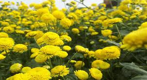 phòng chống thừa cân và béo phì bằng liệu pháp hoa