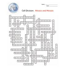 cell division mitosis and meiosis crossword puzzle homework  cell division mitosis and meiosis crossword puzzle