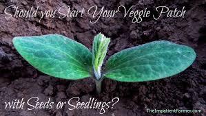starting a vegetable garden should you choose seeds or starts