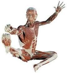richmond body works body worlds exhibition science museum richmond va i cant wait