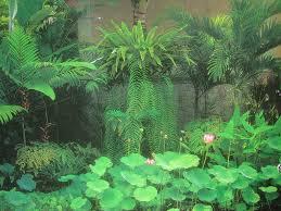 Modern Tropical Garden Design Made Wijaya Tropical Texana Garden Book Review Tropical Garden Design