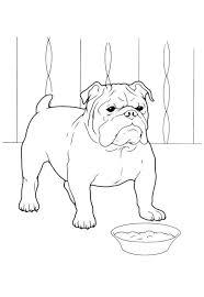 Cani Da Colorare Bulldog Inglese Da Stampare E Colorare