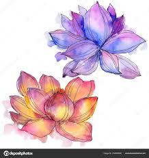 уайлдфлауэр акварель красочные лотос цветок ботанический цветочные
