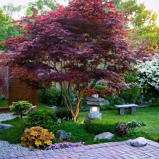 Design U0026 Decorating Traditional Landscape Natural Privacy Screen Good Trees For Backyard