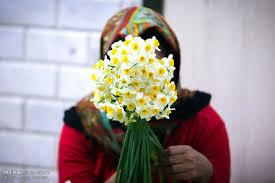 نتیجه تصویری برای گل نرگس من