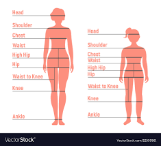 Body Chart Woman And Girl Size Chart Human Front Side Vector Image