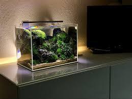 Nano Tank Bucephalandra Nano Aquarium Aquarium Betta