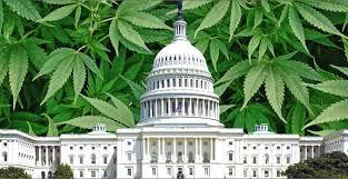 Alaska attorney general calls on Congress to pass marijuana-friendly  banking legislation | The Midnight Sun