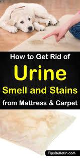 urine smell