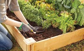 ideas and tips for your raised garden