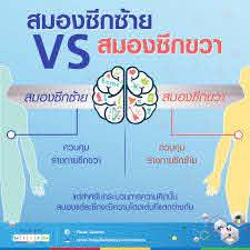 Plook Science - สมองซีกซ้าย vs. สมองซีกขวา พวกมันทำอะไรบ้างนะ