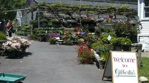 herbs and garden center organic also vegetable plants plus olive pa as home san antonio tx olive garden